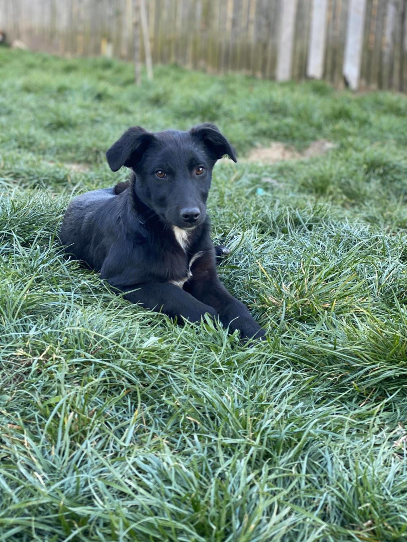 Mystic- femelle- fourrière de Târgu Frumos - Adoptée via Andrea 92125410