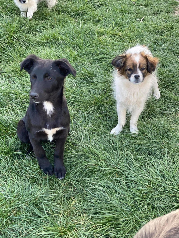 Pili- femelle- fourrière de Târgu Frumos - réservée adoption (68) 92215311