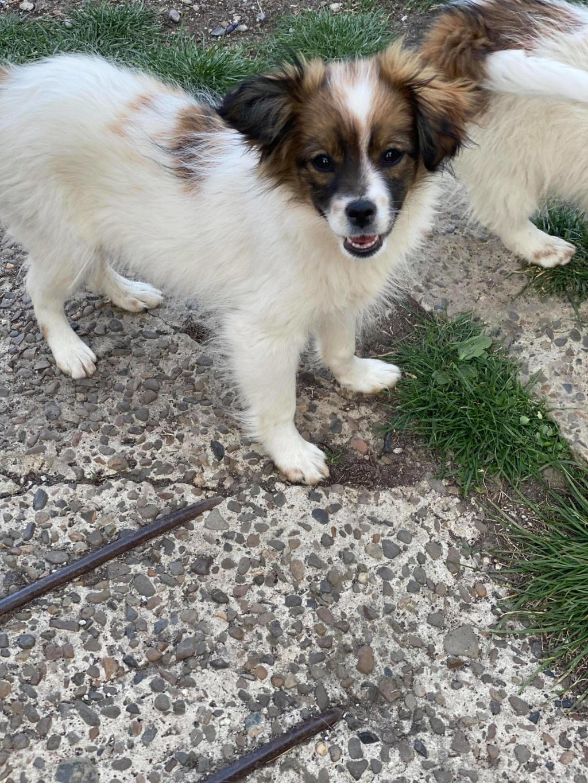 Pili- femelle- fourrière de Târgu Frumos - réservée adoption (68) 92246510