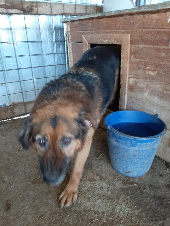 Lunky - mâle -  fourrière de Târgu Frumos - frais d'adoption réduits 92275410