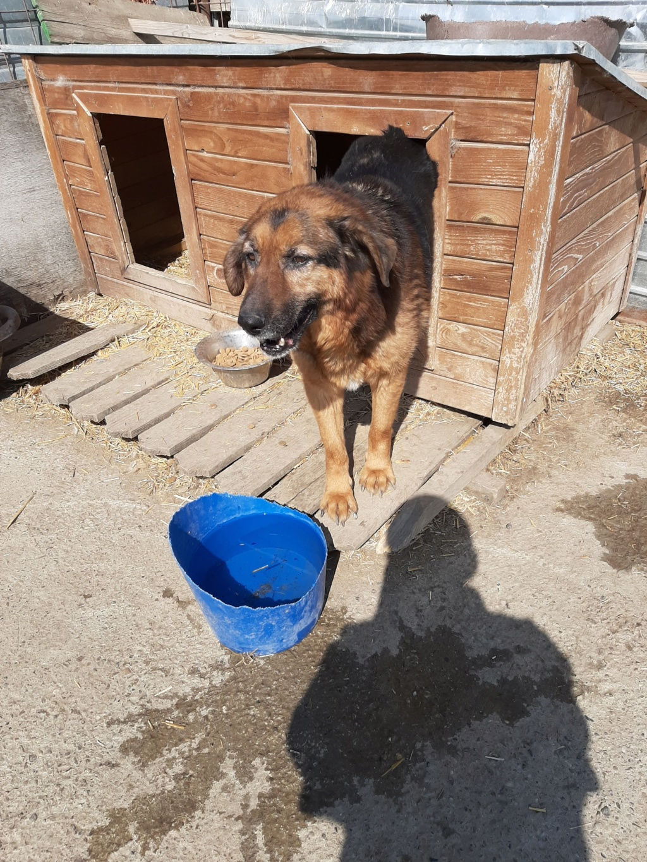 Lunky - mâle -  fourrière de Târgu Frumos - frais d'adoption réduits 92461310