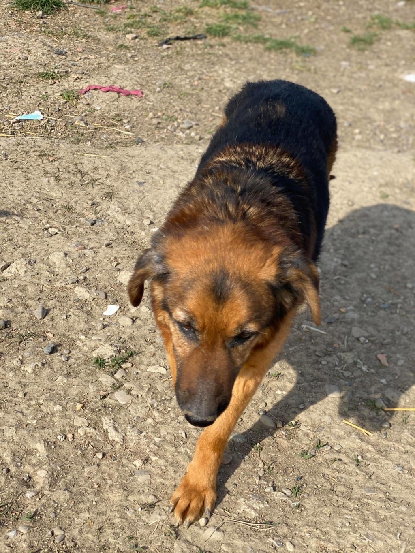 Lunky - mâle -  fourrière de Târgu Frumos - frais d'adoption réduits 93373810
