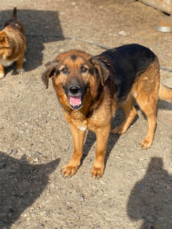 Lunky - mâle -  fourrière de Târgu Frumos - frais d'adoption réduits 93886910