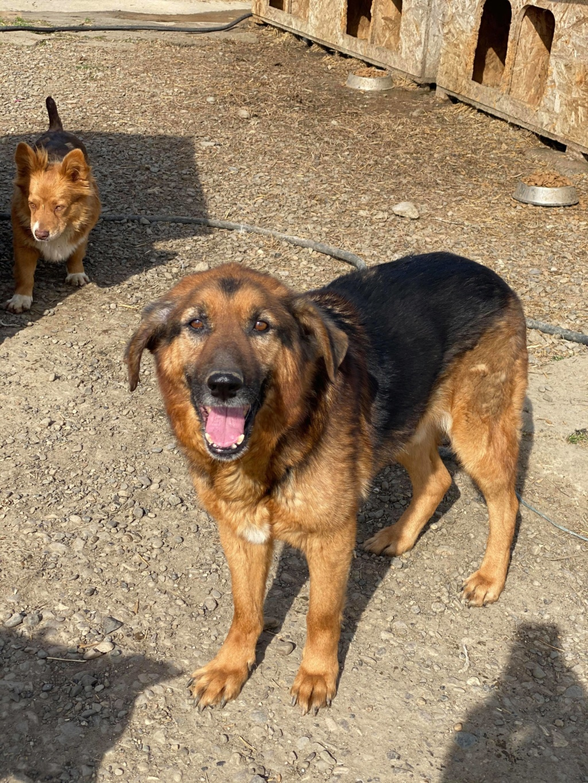 Lunky - mâle -  fourrière de Târgu Frumos - frais d'adoption réduits 93888710