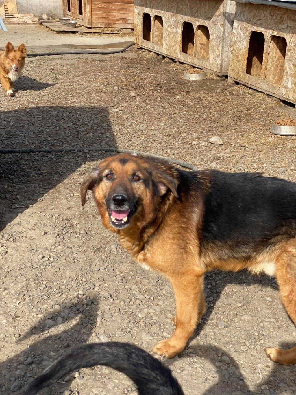 Lunky - mâle -  fourrière de Târgu Frumos - frais d'adoption réduits 94001010