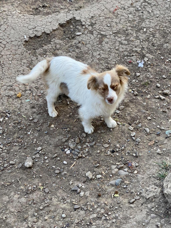 Rocky- mâle- fourrière de Târgu Frumos 94118810
