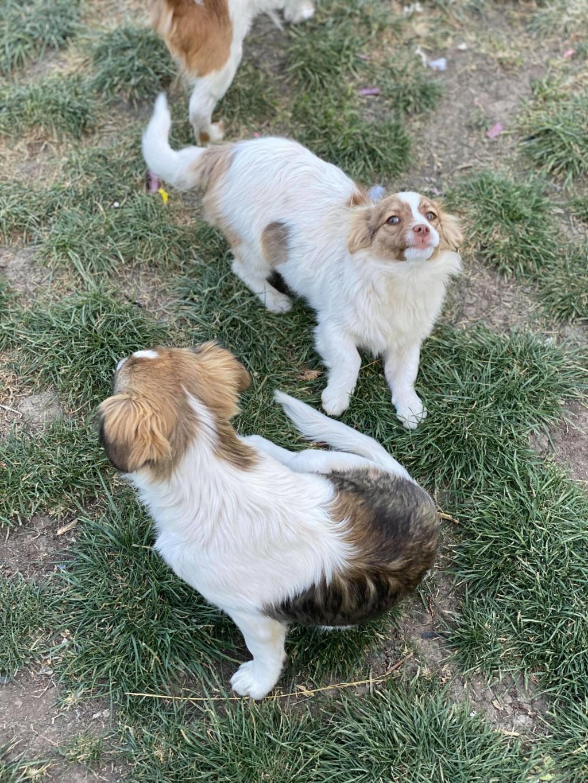 Rocky- mâle- fourrière de Târgu Frumos 94188510