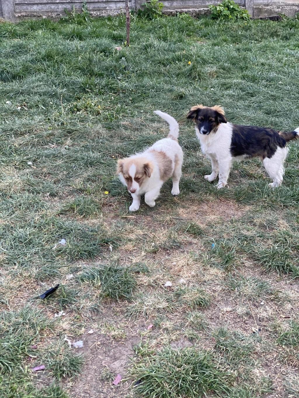 Rocky- mâle- fourrière de Târgu Frumos 94387611