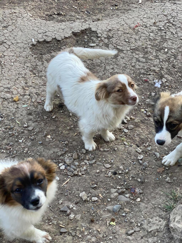 Rocky- mâle- fourrière de Târgu Frumos 94390411