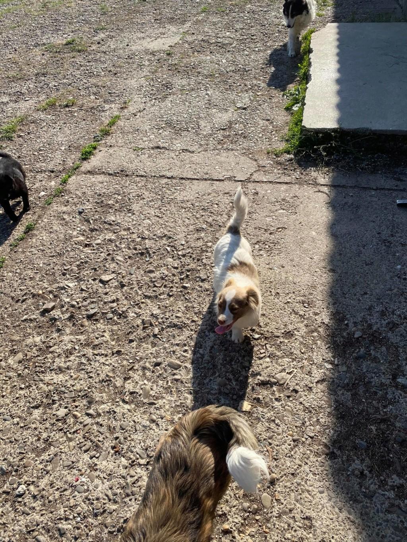 Rocky- mâle- fourrière de Târgu Frumos 94438010