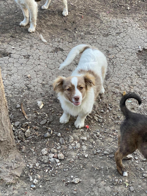 Rocky- mâle- fourrière de Târgu Frumos 94876011