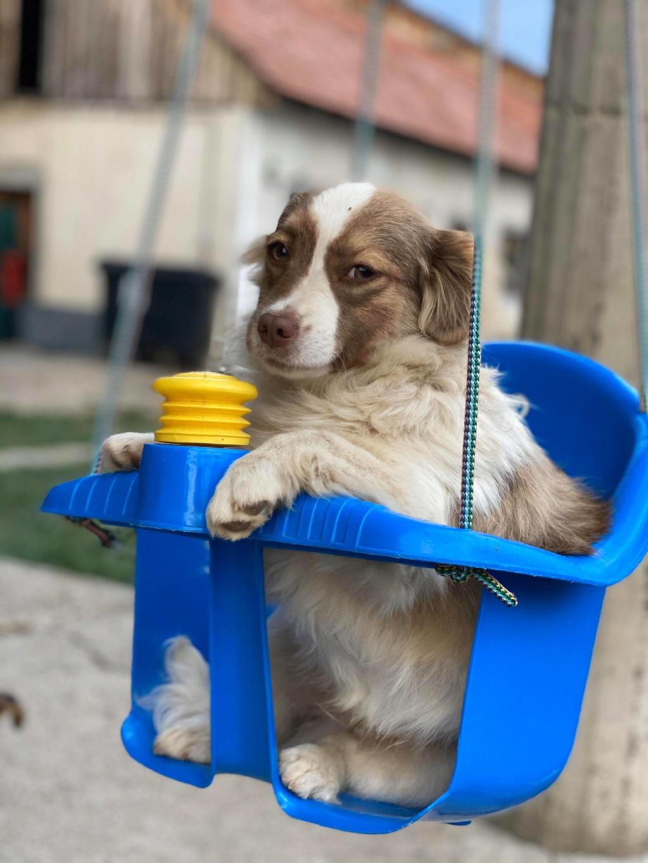 Rocky- mâle- fourrière de Târgu Frumos 95191610