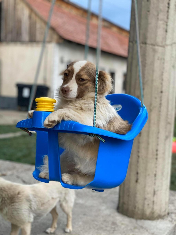 Rocky- mâle- fourrière de Târgu Frumos 95290310