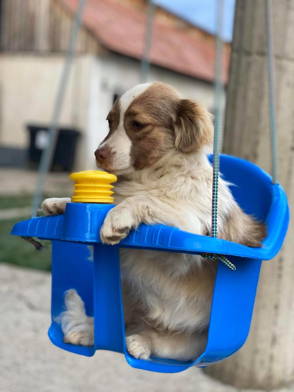 Rocky- mâle- fourrière de Târgu Frumos 95429210
