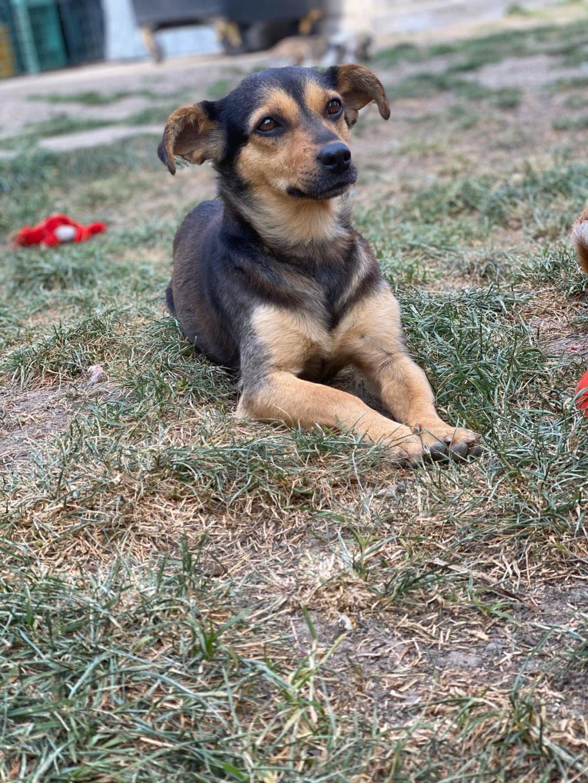 Nudel- femelle- fourrière de Târgu Frumos - adoptée via Andreea 96063910
