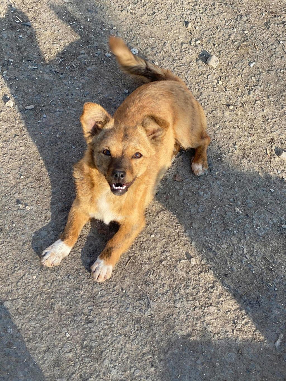 Maxine ex-Atacama-femelle- fourrière de Târgu Frumos - réservée adoption Atacam10
