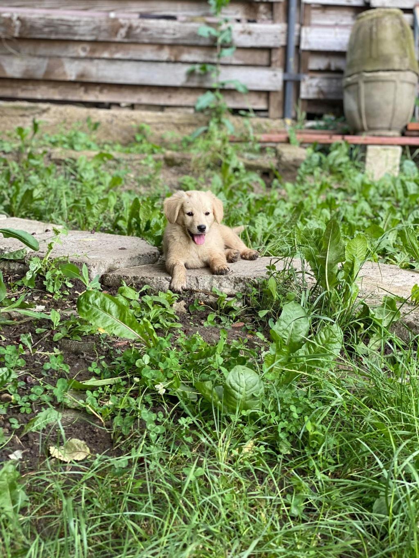 Toffee- femelle-fourrière de Târgu Frumos - multiples demandes en cours Toffee10