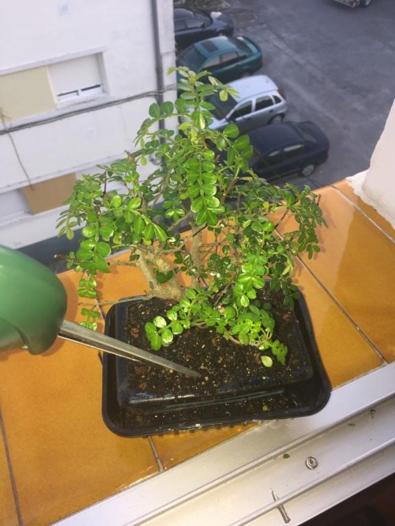 Ayuda con pimentero japonés Img_1110