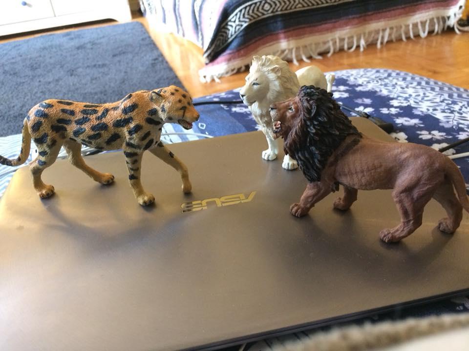 Extinct Giant Cheetah Img311
