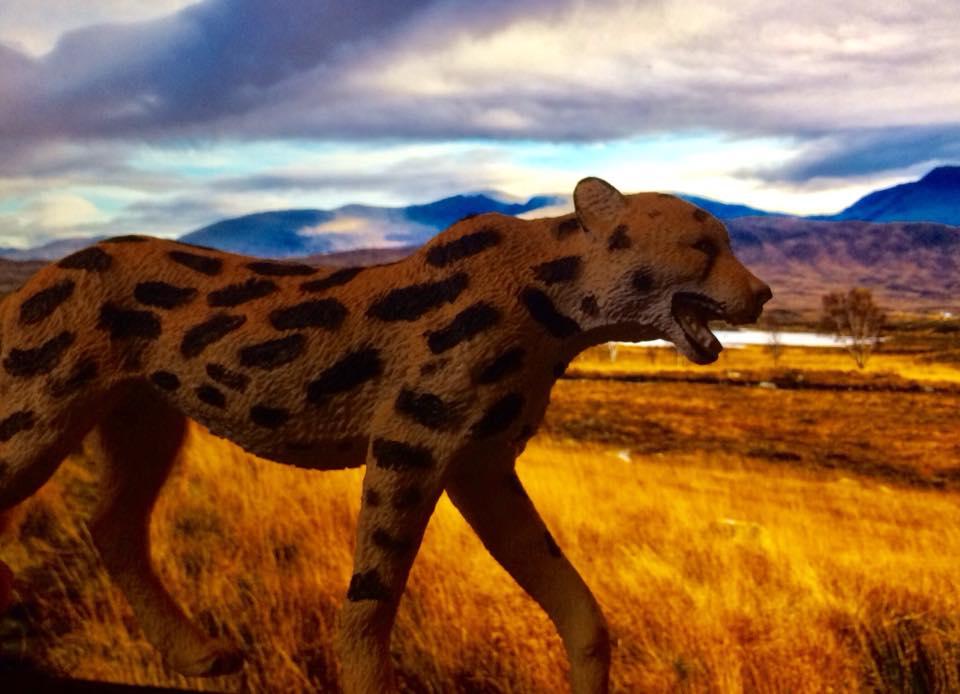 Extinct Giant Cheetah Img411