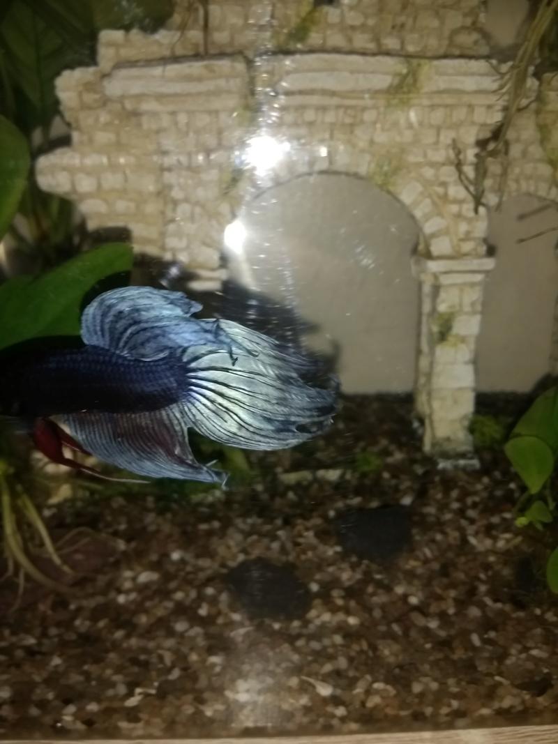 Besoin de conseils, premier poisson Img_2023