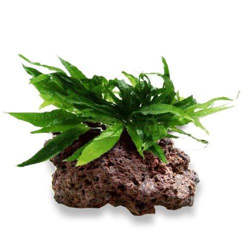 Conseils plantes faciles à entretenir Fouger10