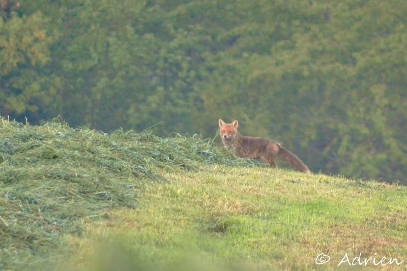 Photographie Animalière Dsc_0010