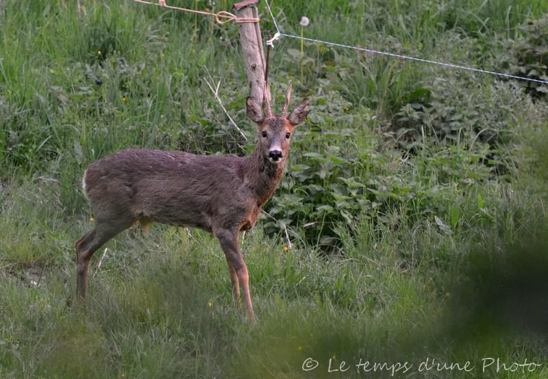Photographie Animalière Dsc_0011