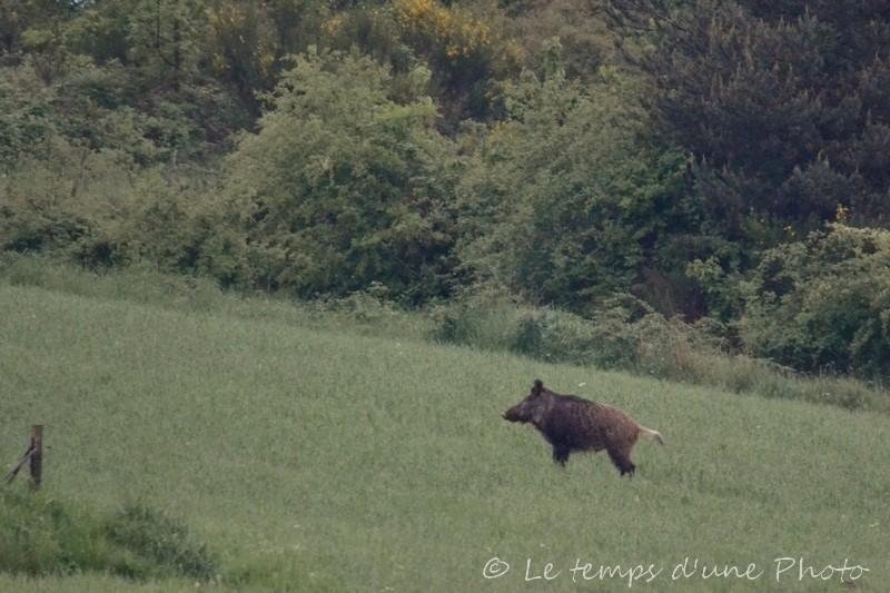 Photographie Animalière - Page 2 Dsc_0020