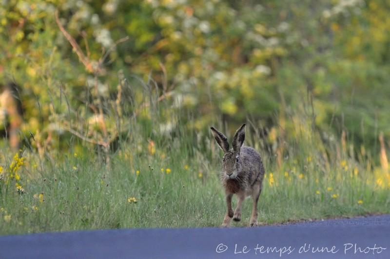 Photographie Animalière - Page 2 Dsc_0021