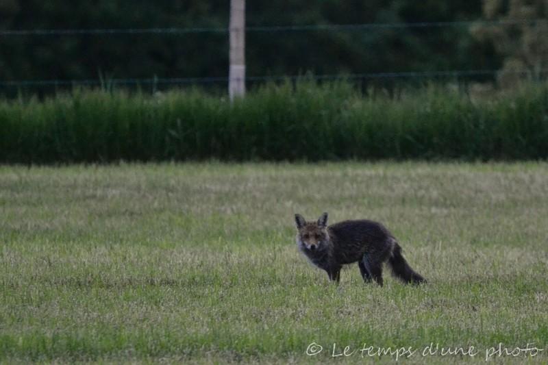 Photographie Animalière - Page 3 Dsc_0029