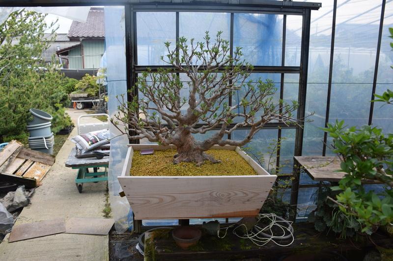 Chez Hiromi Tsukada. Dsc_0221