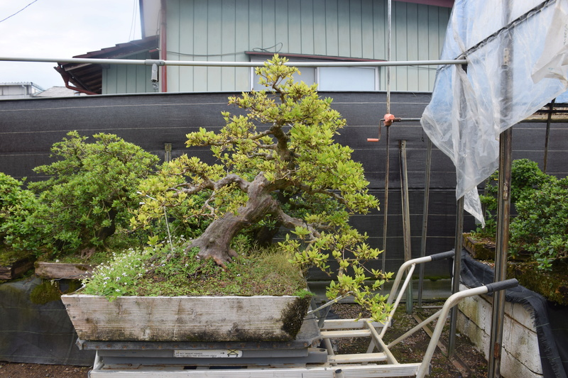 Chez Hiromi Tsukada. Dsc_0223