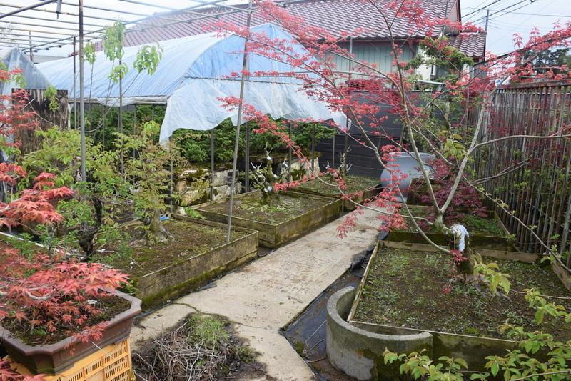 Chez Hiromi Tsukada. Dsc_0226