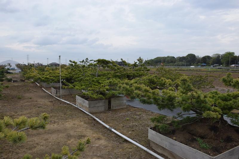 Chez Hiromi Tsukada. Dsc_0316