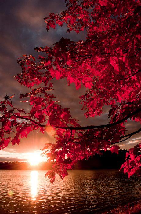 Photos d'automne - Page 6 33a6f710