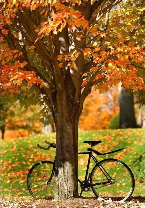 Photos d'automne - Page 3 490f3d10