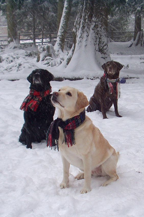 Photos d'hiver  - Page 2 556ed410