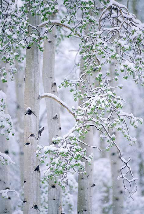 Photos d'hiver  - Page 4 56c20c10