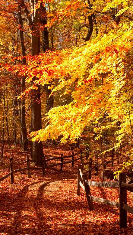 Photos d'automne - Page 7 65da2110
