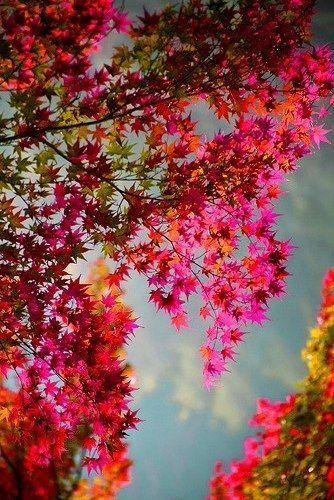 Photos d'automne - Page 3 667d4d10
