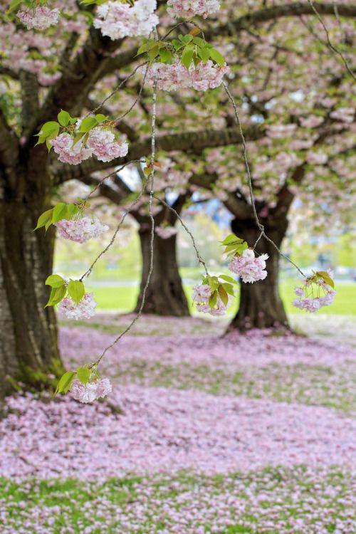 Photos de printemps/été - Page 5 69246810