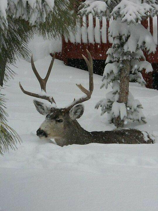 Photos d'hiver  - Page 4 82ccba10