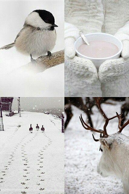 Photos d'hiver  - Page 4 91b40710