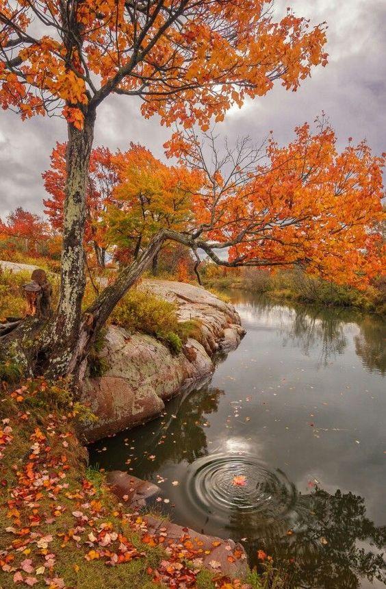 Photos d'automne - Page 5 9639ff10