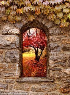 Photos d'automne - Page 3 A7852410