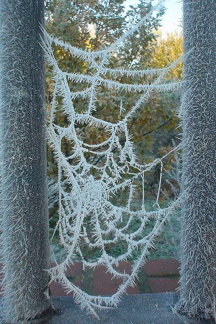 Photos d'hiver  - Page 9 A8ec5010