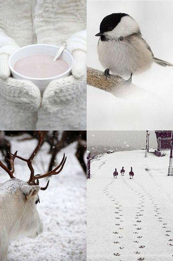 Photos d'hiver  - Page 9 Bb6dcd10