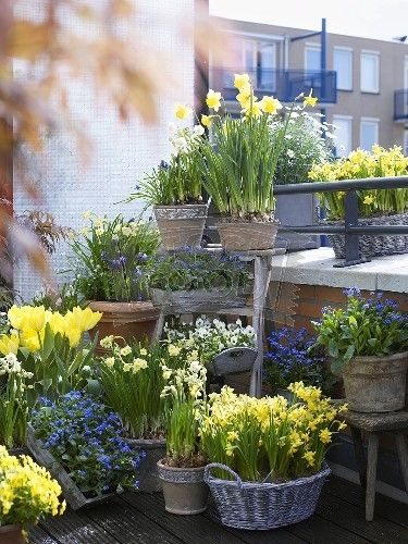 Photos de printemps/été - Page 3 Cc942a11