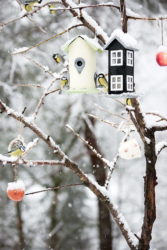 Photos d'hiver  - Page 4 D392cd10